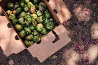 A box of tomatillos at a food distribution site represents a culturally appropriate model for emergency aid. La Semilla has delivered at least 30,000 pounds of healthy food throughout the pandemic to Latino neighborhoods, filled with seasonal produce like squash, tomatoes and tropical fruits and trays of meals prepared by chefs. The food comes from partnerships with existing local food banks, catering companies and farm networks. / Victoria Bouloubasis