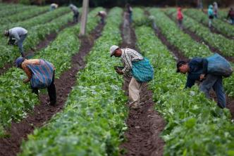 Trabajadores agrícolas durante la pandemia