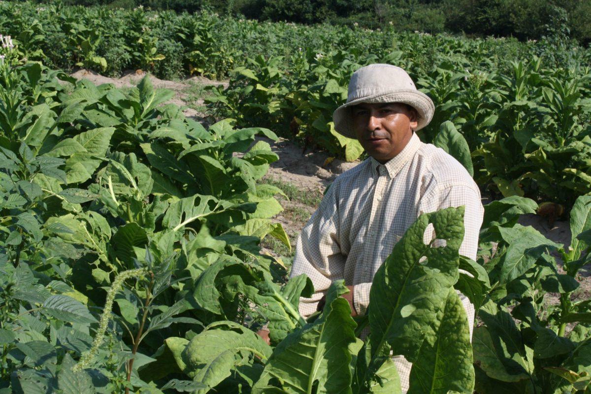 vacunación de trabajadores agrícolas en Carolina del Norte