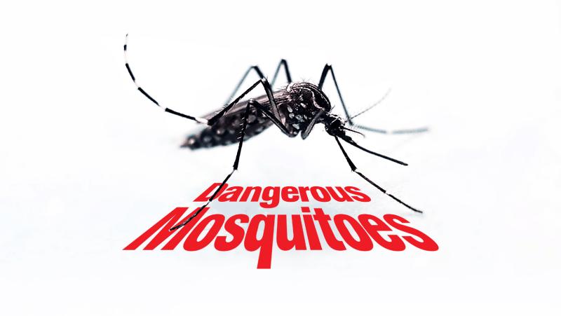 Mosquitos y moscos