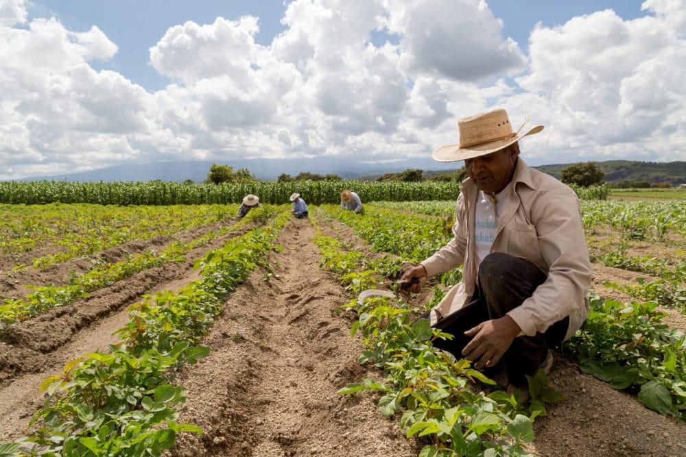 trabajadores-agrícolas-Visas-H-2A