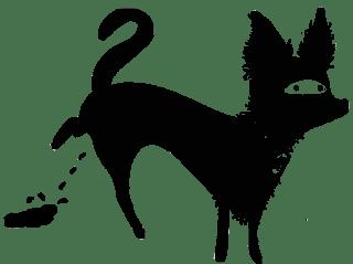 gato-perro-1-2