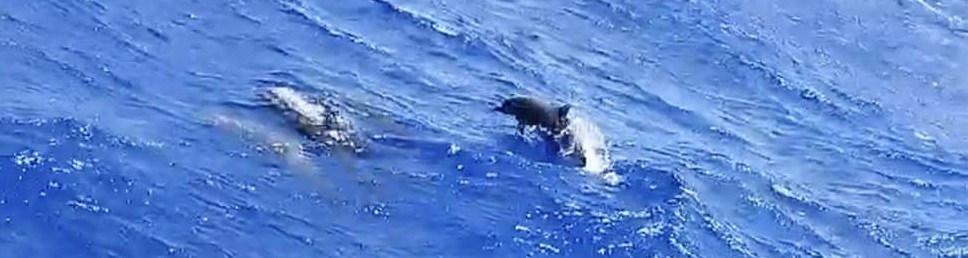 ¡Delfines!