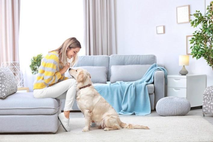 270+ Pet Sitting Business Name Ideas – Enlightening Words