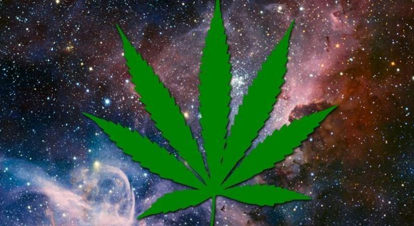 """Marijuana Contains """"Alien DNA"""" From Outside Of Our Solar System, NASA Confirms – Blindfold"""