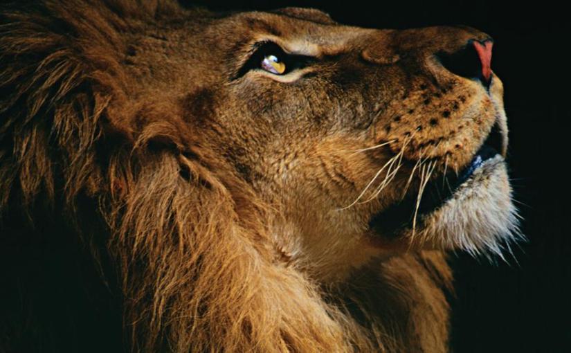Leo Daily Horoscope: Monday, February 11