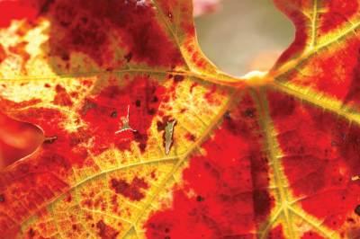 Leaf Portal