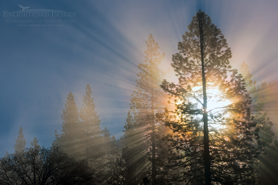 http://enlightphoto.com/photo-info/sunbeam-through-pine-tree-photo.html