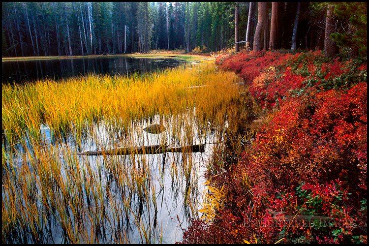 http://enlightphoto.com/photo-info/yes115-siesta-lake-autumn-fall-photo.html