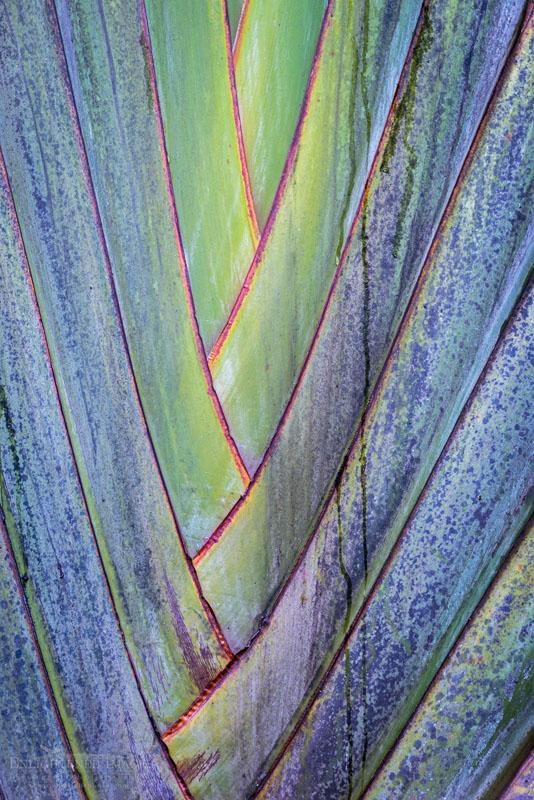 Photo: Leaf detail, Hawaii Tropical Botanical Garden, near Onomea, South Hilo Disrtict, The Big Island of Hawai'i, Hawaii