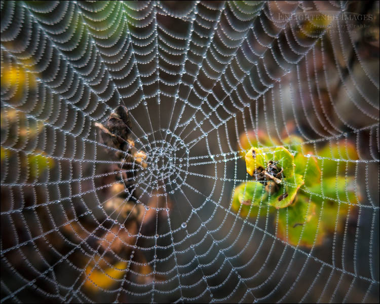 Photo: Spiderweb with dewdrops at Limantour Beach, Point Reyes National Seashore, Marin County, California