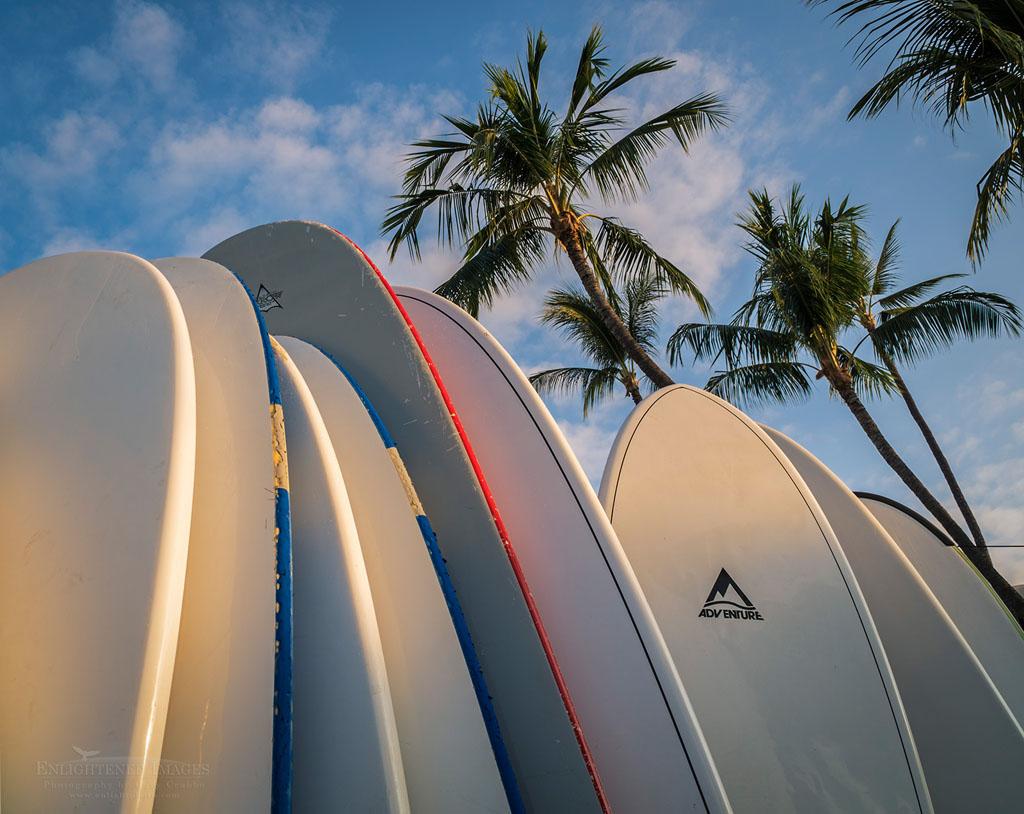 Photo: Surfboards and palm trees, Kailua-Kona, Hawaii