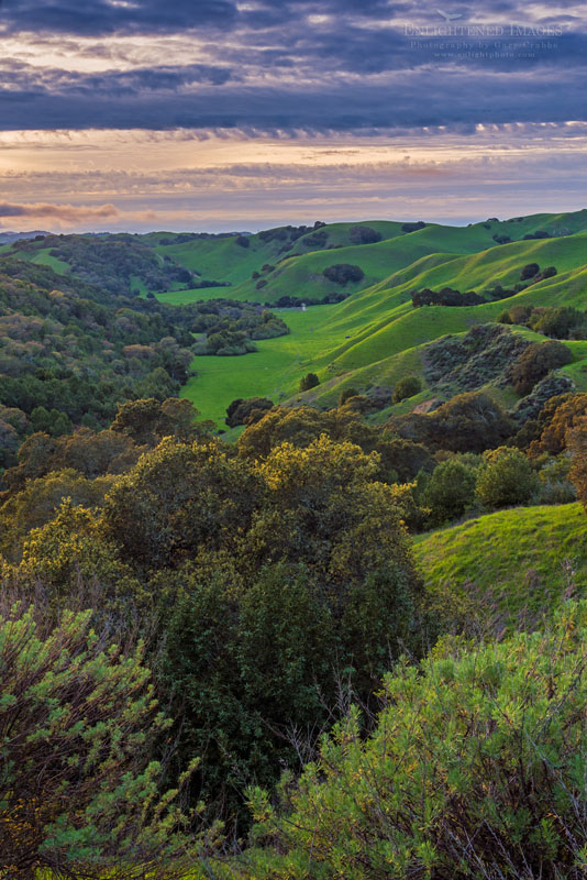 Photo: Overlooking the rolling green hills above Briones Valley,  Briones Regional Park, Contra Costa County, California