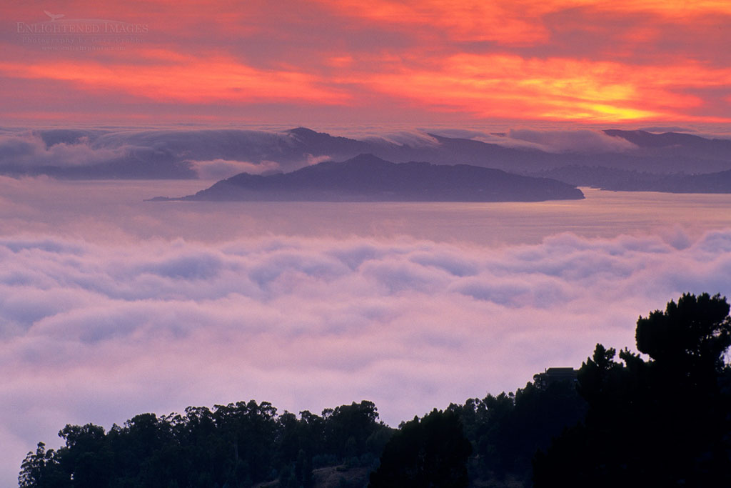 Photo: Fog banks roll into San Francisco Bay at sunset, from Berkeley Hills, California