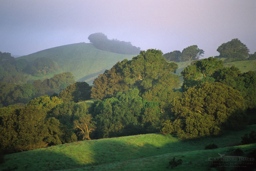 Photo: Green hills and oak trees in morning mist in spring on Lafayette Ridge, Lafayette, California