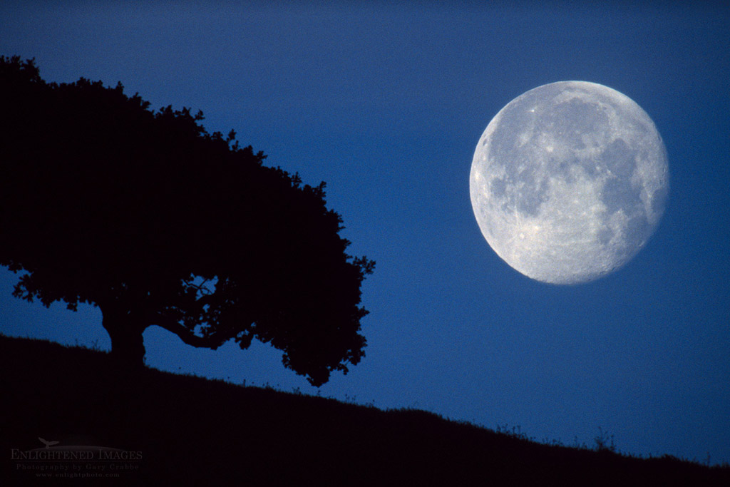 Photo: Moonset in pre-dawn light next to lone oak tree in the Briones Region, Contra Costa County, California