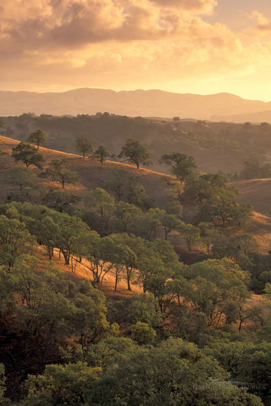 Photo: Clouds at sunset over golden hills and oak trees, Mount Diablo State Park, Contra Costa, California