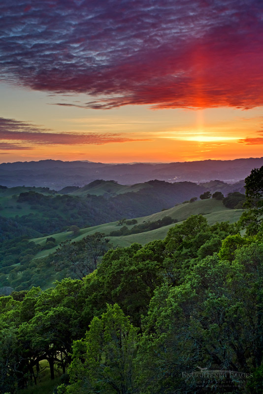 Photo: Sun pillar at sunset over oak trees and green hills in Spring, tMount Diablo State Park, Contra Costa County, California