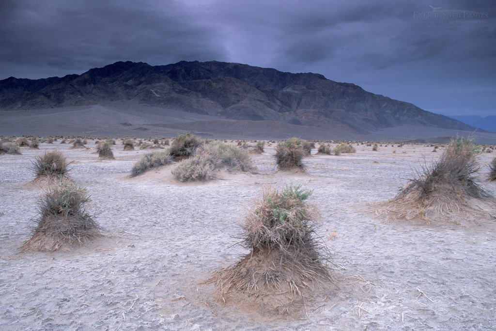 Photo: Storm clouds over arrowweed at Devils Cornfield, below Tucki Mountain, Death Valley National Park, California