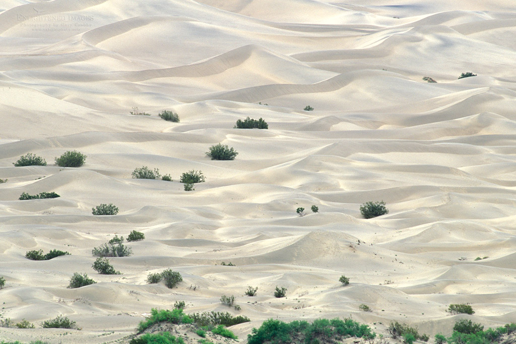Photo: Mesquite Flat Sand dune pattern detail, Stovepipe Wells, Death Valley National Park, California