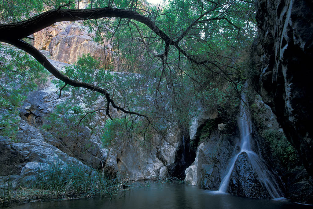 Photo: Riparian habitat at Darwin Falls,  Darwin Canyon, Death Valley National Park, California