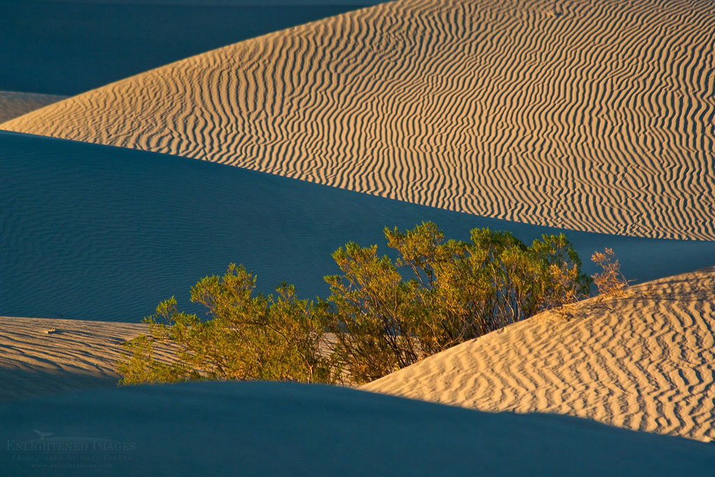 Photo: Bush in the Mesquite Flat Sand Dunes, near Stovepipe Wells, Death Valley National Park, California