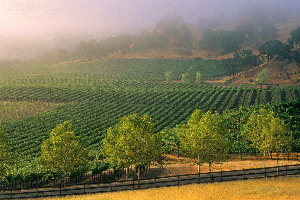 Photo: Morning fog over vineyards at sunrise, near Hopland, Mendocino County, California