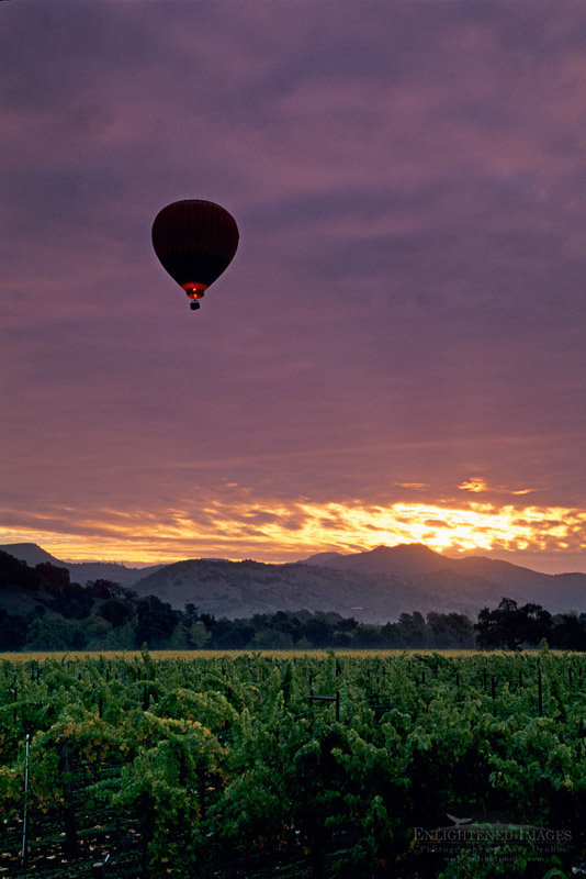 Photo: Hot air balloon over vineyards at sunrise, near Yountville, Napa Valley, Napa County, California
