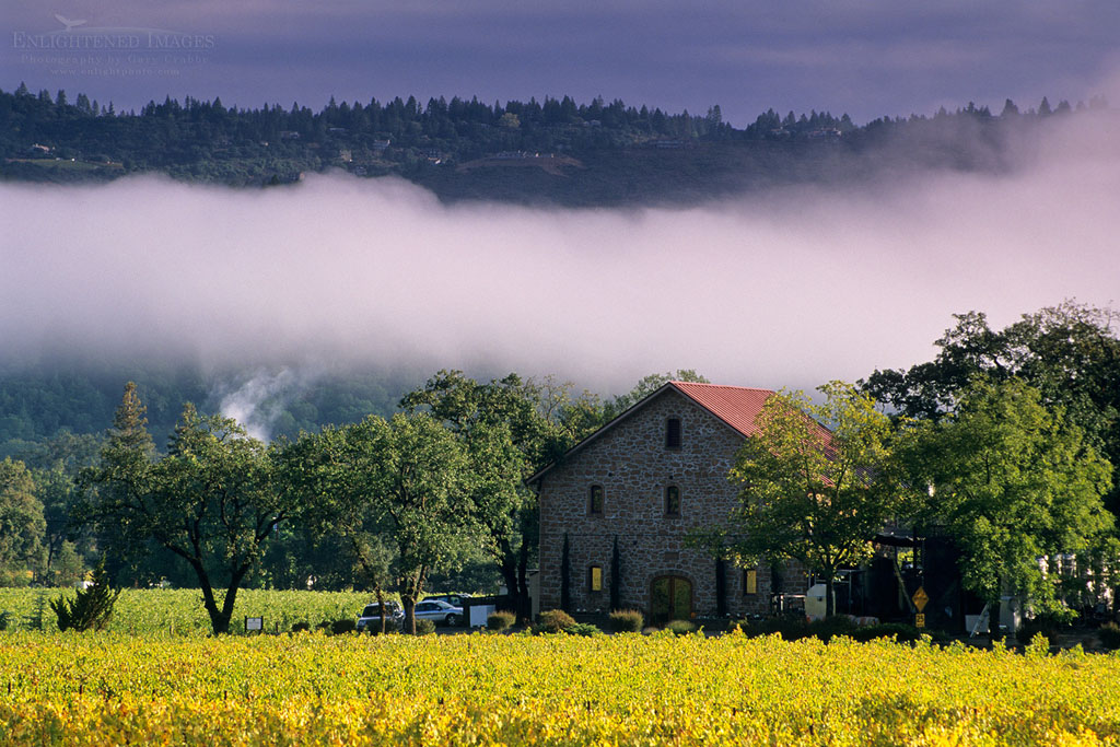 Photo: Morning fog over vineyards at Ehlers Estate Winery, near St. Helena, Napa County, California