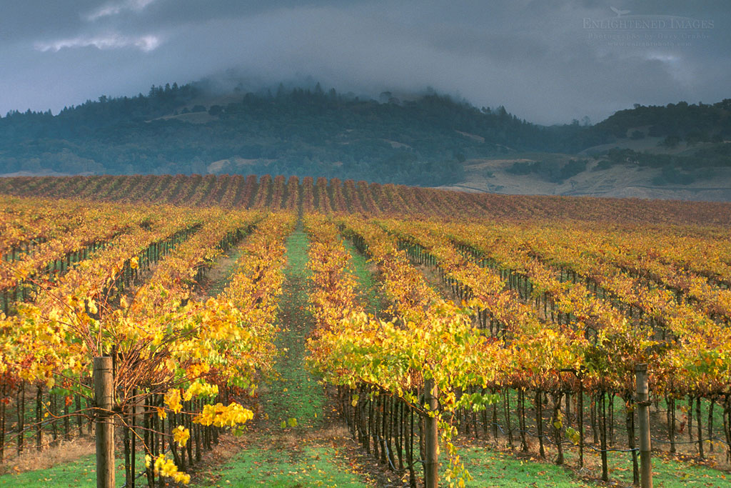 Photo: Clouds over Alexander Valley vineyard on a fall morning, near Asti, Sonoma County, California