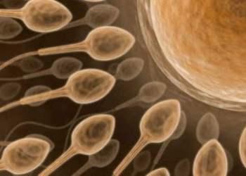 """""""Espermatograma Computarizado"""" ayuda a diagnosticar con precisión este mal"""
