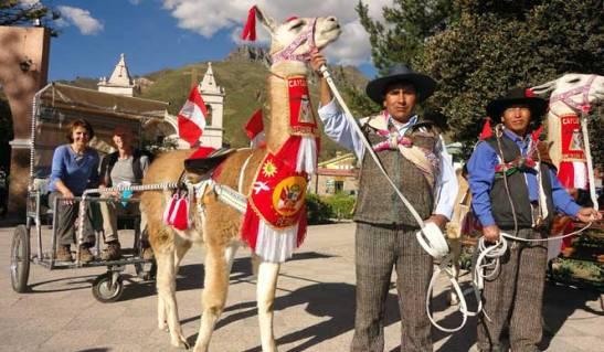 Taxi Llama, el nuevo servicio de transporte en el Colca