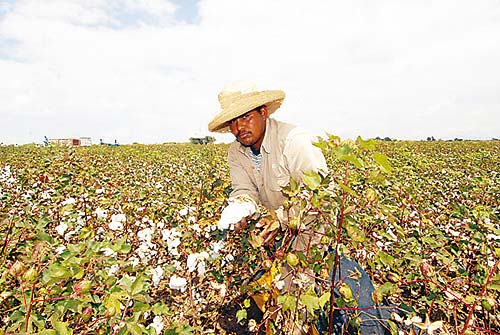 Empresarios nacionales apoyarán la Cadena Nacional de Algodón