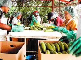 Exportaciones de productos con valor agregados recibirían más medidas favorables