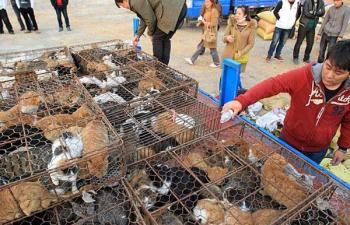 Gatos rescatados en China