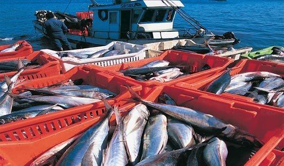 Promperú participará en Misión Comercial a Rusia junto a ocho empresas del sector pesca.
