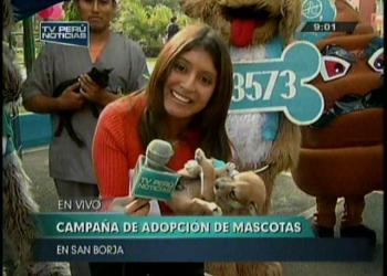 San Borja promueve campaña de adopción de mascotas (Video)