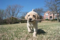 Tener un perro como mascota disminuye el estrés y el riesgo de infarto