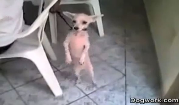 El perro salsero, el video viral más compartido en Facebook (Video)