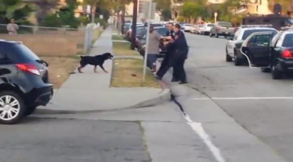 Indignante: Policías disparan contra perro que sólo defendía a su dueño