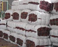 Las pocas exportaciones  de páprika ha generado el déficit en el rubro capsicum.