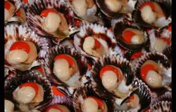 Las conchas de abanico aportaron considerablemente en el crecimiento de las exportaciones del sector acuícola.