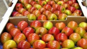 Las manzanas chilenas no han recibido el aval de Senasa para su ingreso al Perú.