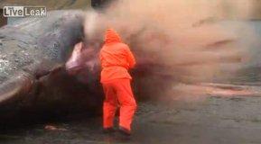 [VIDEO] Ballena le explota en la cara a pescador en Islas Feroe