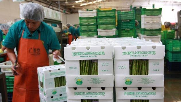 El esparrago fue el producto agrícola peruano más exportado del rubro no tradicional hasta octubre.