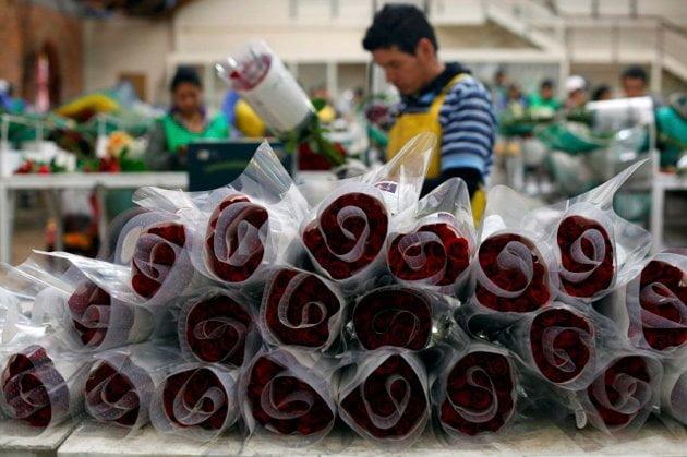 Las exportaciones de flores peruanas registrarían un crecimiento de 15% este año.