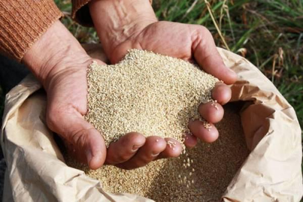 El mercado brasileño ha incrementado enormemente su pedido por la quinua peruana.