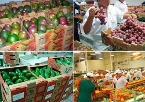Perú no ha capitalizado las demandas hondureñas compuestas en su mayoría de productos agroindustriales.