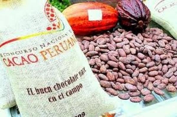 Gracias a la calidad del cacao nacional, las exportaciones del grano en mención llegaron a nuevos mercados durante el primer trimestre del 2014.