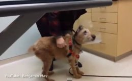 [VIDEO] Perrito ciego vio por primera vez a su familia tras operación